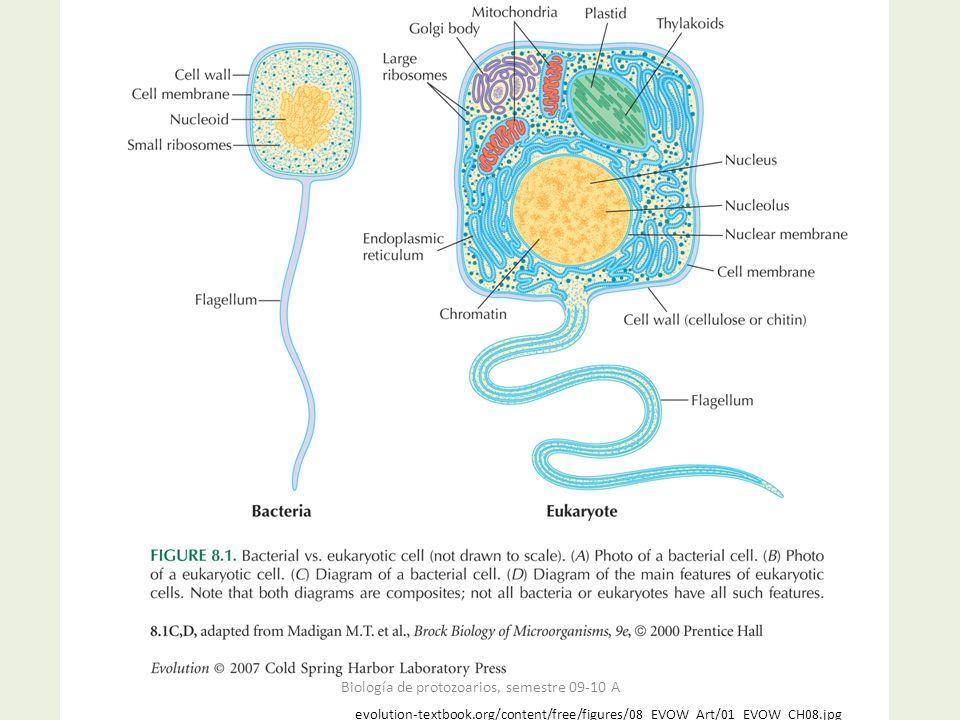 evolution-textbook.org/content/free/figures/08_EVOW_Art/01_EVOW_CH08.jpg Biología de protozoarios, semestre 09-10 A