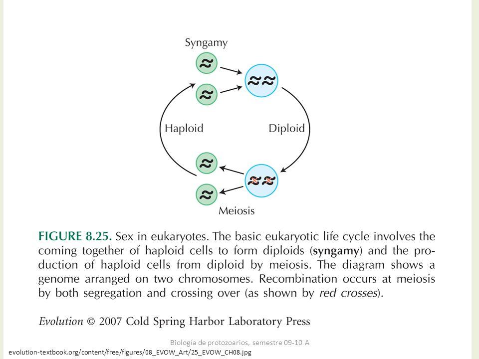 evolution-textbook.org/content/free/figures/08_EVOW_Art/25_EVOW_CH08.jpg Biología de protozoarios, semestre 09-10 A