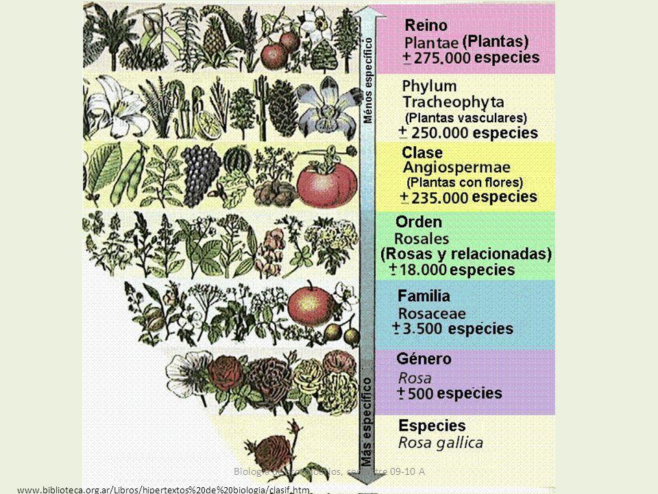 www.biblioteca.org.ar/Libros/hipertextos%20de%20biologia/clasif.htm Biología de protozoarios, semestre 09-10 A