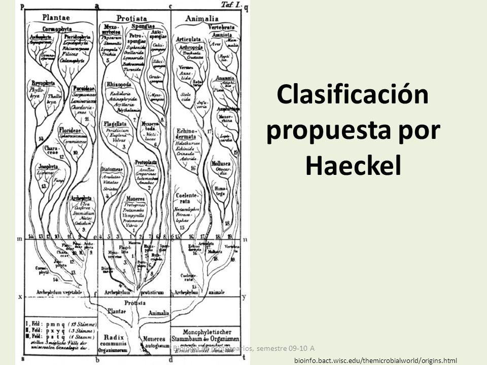 Clasificación propuesta por Haeckel bioinfo.bact.wisc.edu/themicrobialworld/origins.html Biología de protozoarios, semestre 09-10 A
