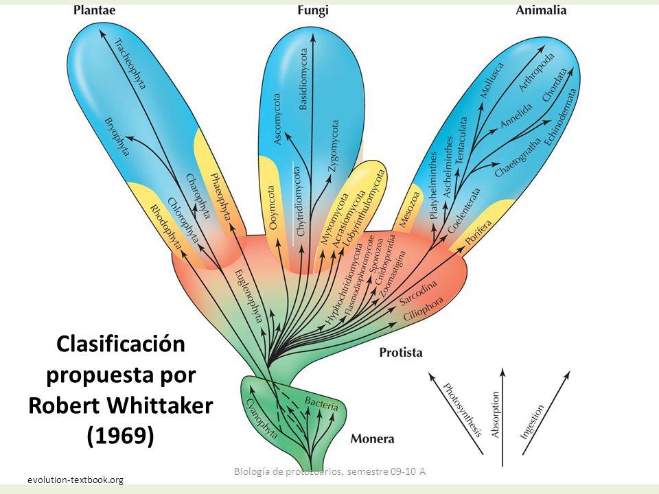 Clasificación propuesta por Robert Whittaker (1969) evolution-textbook.org Biología de protozoarios, semestre 09-10 A