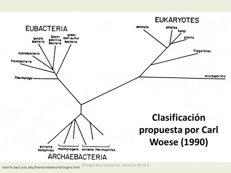 Clasificación propuesta por Carl Woese (1990) bioinfo.bact.wisc.edu/themicrobialworld/origins.html Biología de protozoarios, semestre 09-10 A
