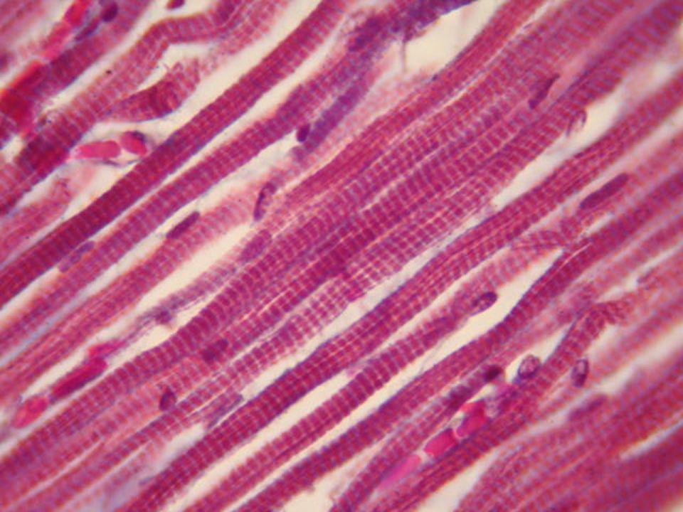 http://1.bp.blogspot.com/- B2K9zfzU_Es/T7gHs_uHY8I/AAAAAAAAAB4/o MpMXETe3KM/s1600/muscular.jpg