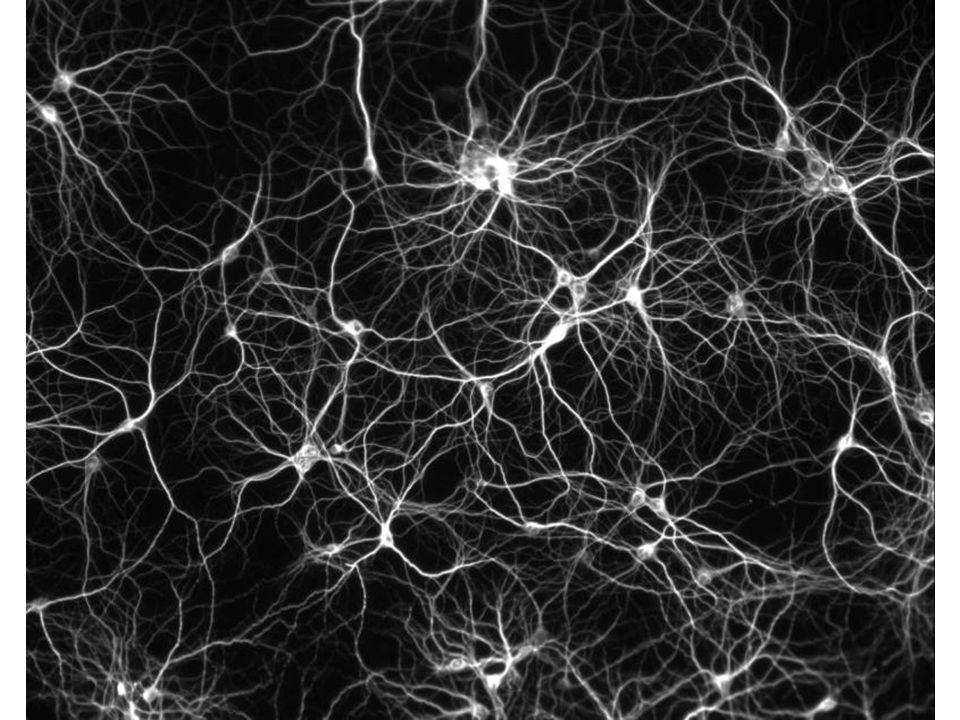 http://static.naukas.com/media/2012/04/neur on-network.jpg