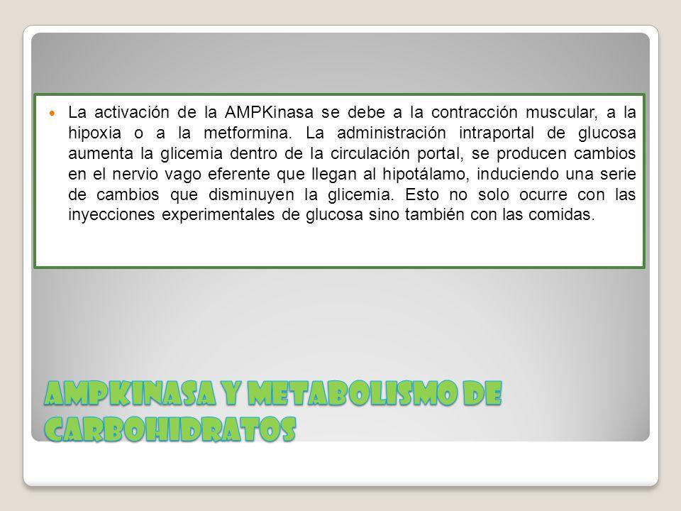 La activación de la AMPKinasa se debe a la contracción muscular, a la hipoxia o a la metformina. La administración intraportal de glucosa aumenta la g