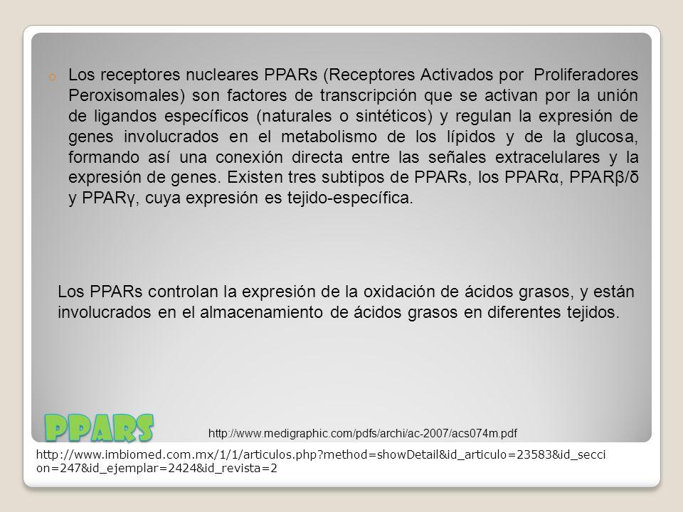 o Los receptores nucleares PPARs (Receptores Activados por Proliferadores Peroxisomales) son factores de transcripción que se activan por la unión de