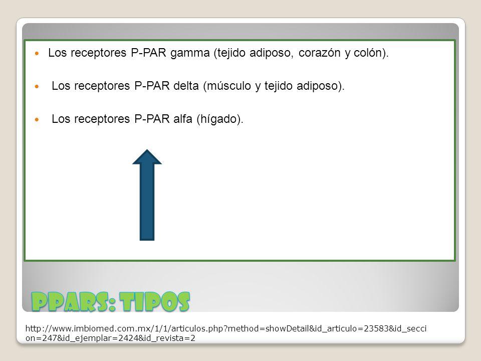Los receptores P-PAR gamma (tejido adiposo, corazón y colón). Los receptores P-PAR delta (músculo y tejido adiposo). Los receptores P-PAR alfa (hígado