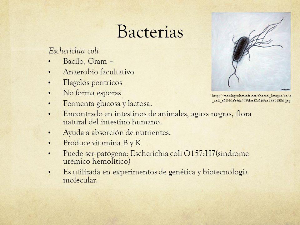 Bacterias Escherichia coli Bacilo, Gram – Anaerobio facultativo Flagelos peritricos No forma esporas Fermenta glucosa y lactosa. Encontrado en intesti