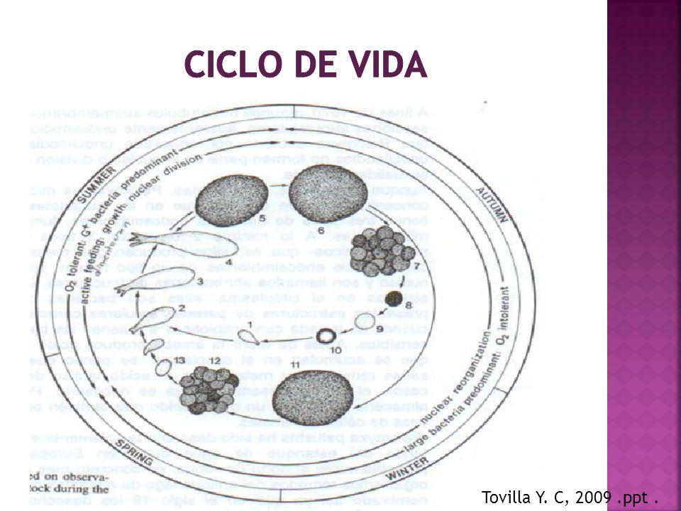 Tovilla Y. C, 2009.ppt.