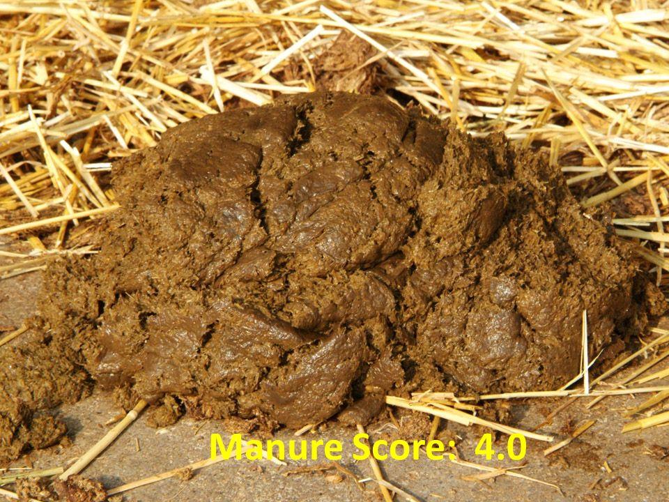Manure Score: 4.0