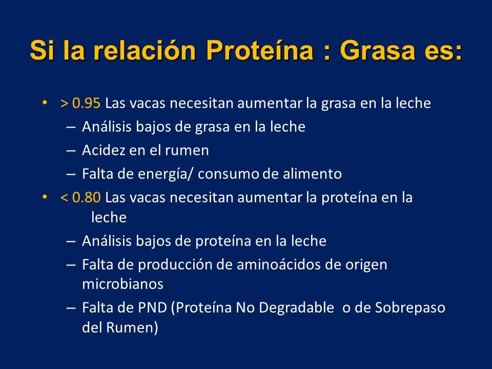 Si la relación Proteína : Grasa es: > 0.95 Las vacas necesitan aumentar la grasa en la leche – Análisis bajos de grasa en la leche – Acidez en el rumen – Falta de energía/ consumo de alimento < 0.80 Las vacas necesitan aumentar la proteína en la leche – Análisis bajos de proteína en la leche – Falta de producción de aminoácidos de origen microbianos – Falta de PND (Proteína No Degradable o de Sobrepaso del Rumen)