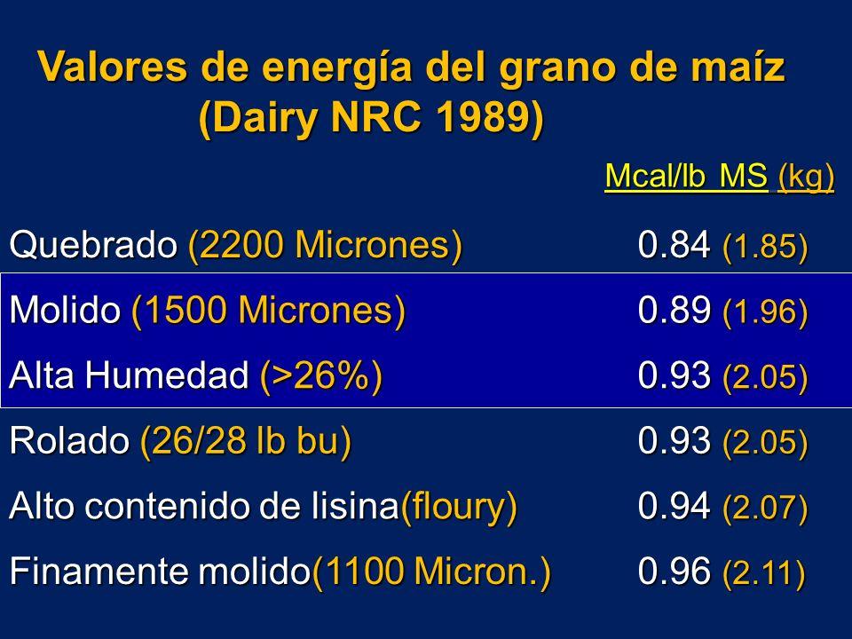 Valores de energía del grano de maíz (Dairy NRC 1989) Mcal/lb MS (kg) Mcal/lb MS (kg) Quebrado (2200 Micrones) 0.84 (1.85) 0.84 (1.85) Molido (1500 Micrones) 0.89 (1.96) 0.89 (1.96) Alta Humedad (>26%) 0.93 (2.05) 0.93 (2.05) Rolado (26/28 lb bu) 0.93 (2.05) 0.93 (2.05) Alto contenido de lisina(floury) 0.94 (2.07) 0.94 (2.07) Finamente molido(1100 Micron.) 0.96 (2.11) 0.96 (2.11)