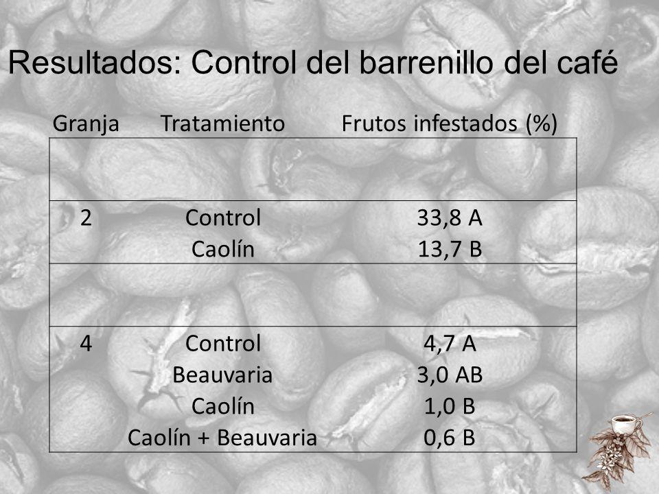 Resultados: Control del barrenillo del café GranjaTratamientoFrutos infestados (%) 2Control33,8 A Caolín13,7 B 4Control4,7 A Beauvaria3,0 AB Caolín1,0