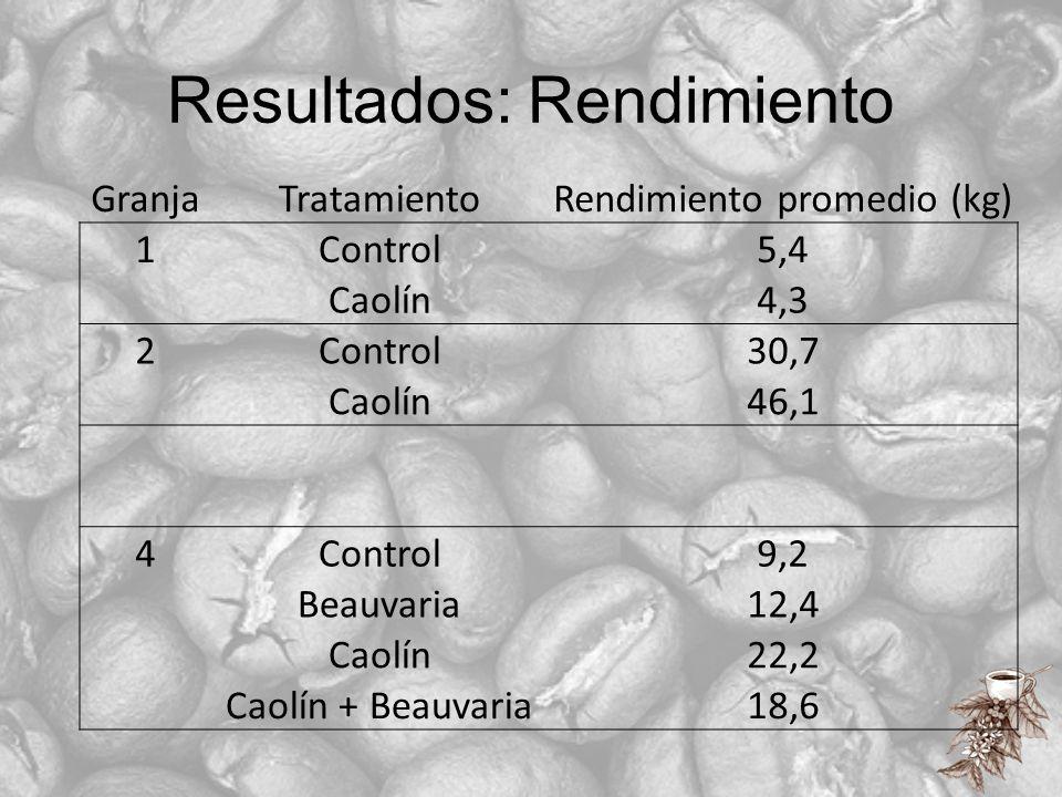 Resultados: Rendimiento GranjaTratamientoRendimiento promedio (kg) 1Control5,4 Caolín4,3 2Control30,7 Caolín46,1 4Control9,2 Beauvaria12,4 Caolín22,2
