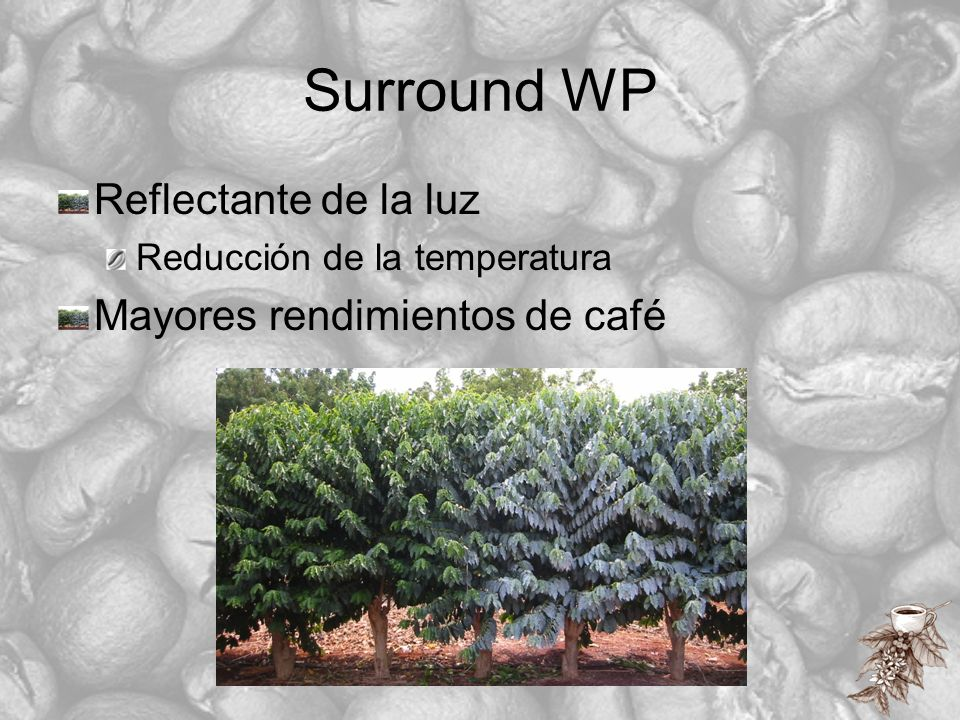 Resultados: Control del barrenillo del café GranjaTratamientoFrutos infestados (%) 1Control21,4 A Caolín31,2 A 2Control33,8 A Caolín13,7 B 3Control18,9 A Caolín15,4 A 4Control4,7 A Beauvaria3,0 AB Caolín1,0 B Caolín + Beauvaria0,6 B