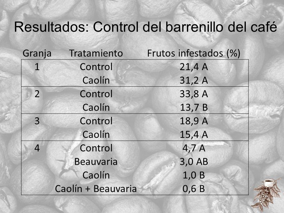 Resultados: Control del barrenillo del café GranjaTratamientoFrutos infestados (%) 1Control21,4 A Caolín31,2 A 2Control33,8 A Caolín13,7 B 3Control18,