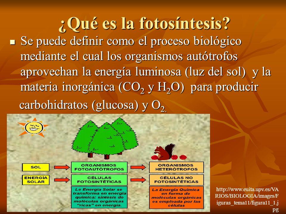 ¿Qué es la fotosíntesis? Se puede definir como el proceso biológico mediante el cual los organismos autótrofos aprovechan la energía luminosa (luz del