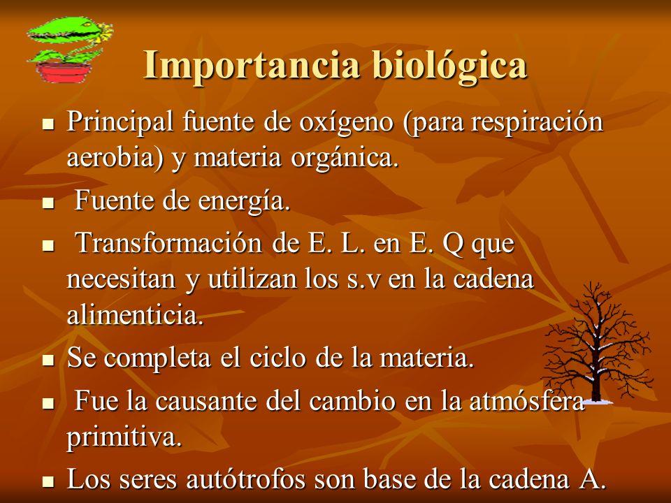 Importancia biológica Principal fuente de oxígeno (para respiración aerobia) y materia orgánica. Principal fuente de oxígeno (para respiración aerobia