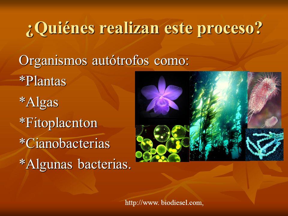 ¿Quiénes realizan este proceso? Organismos autótrofos como: *Plantas*Algas*Fitoplacnton*Cianobacterias *Algunas bacterias. http://www. biodiesel.com,