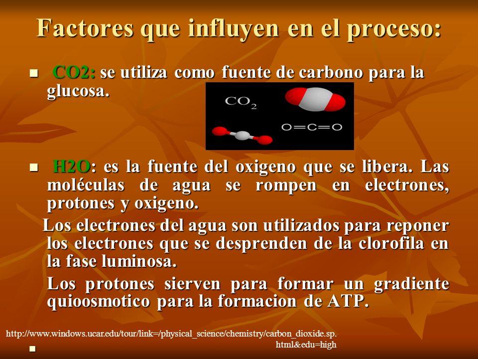 Factores que influyen en el proceso: CO2: se utiliza como fuente de carbono para la glucosa. CO2: se utiliza como fuente de carbono para la glucosa. H