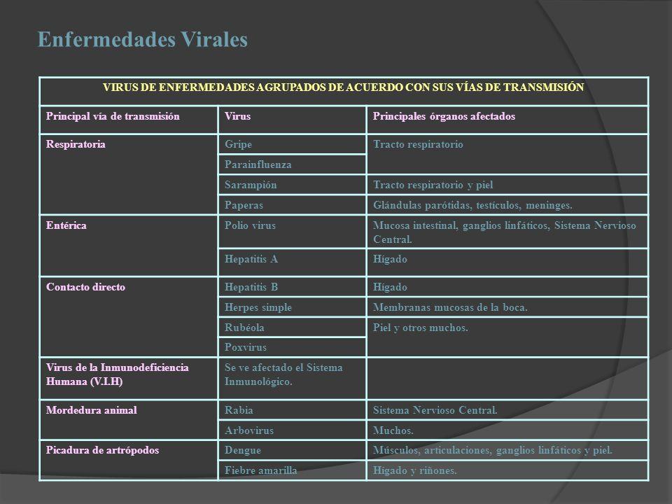 Enfermedades Virales VIRUS DE ENFERMEDADES AGRUPADOS DE ACUERDO CON SUS VÍAS DE TRANSMISIÓN Principal vía de transmisiónVirusPrincipales órganos afect