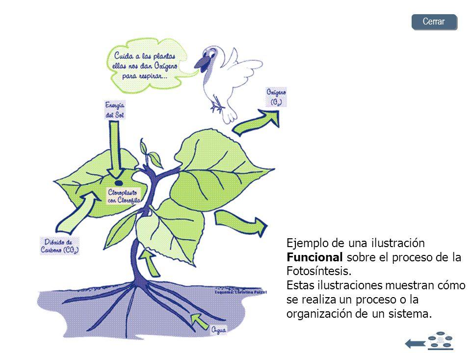 Ejemplo de una ilustración de Arreglo de datos. Estas ilustraciones son comparaciones visuales de datos realizadas por medio de diagramas o tablas. Ce