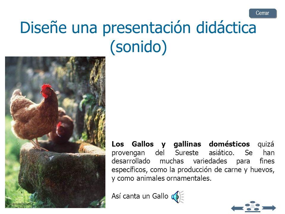 El robin o petirrojo americano es una especie migratoria común en Norteamérica, y vive cerca de los asentamientos humanos. Su canto es hermoso, en esp