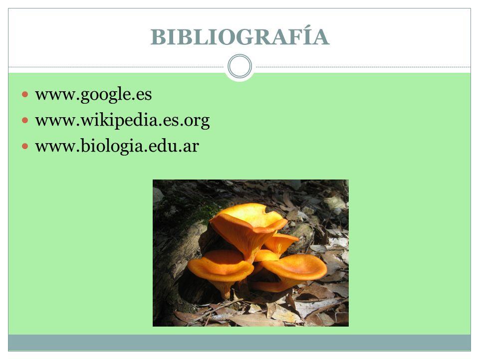BIBLIOGRAFÍA www.google.es www.wikipedia.es.org www.biologia.edu.ar