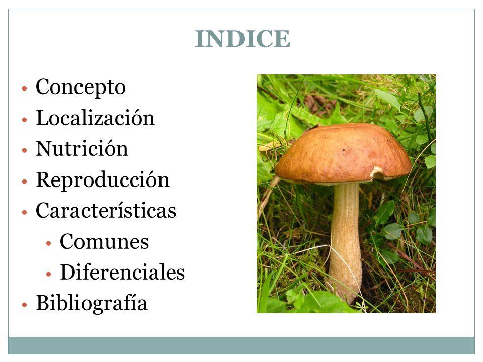 INDICE Concepto Localización Nutrición Reproducción Características Comunes Diferenciales Bibliografía