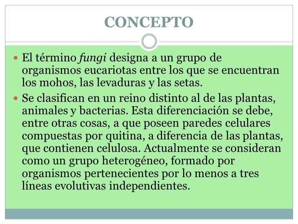 CONCEPTO El término fungi designa a un grupo de organismos eucariotas entre los que se encuentran los mohos, las levaduras y las setas. Se clasifican