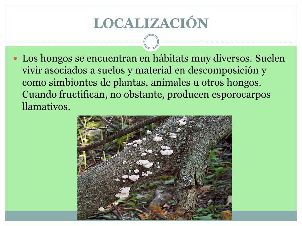 LOCALIZACIÓN Los hongos se encuentran en hábitats muy diversos. Suelen vivir asociados a suelos y material en descomposición y como simbiontes de plan
