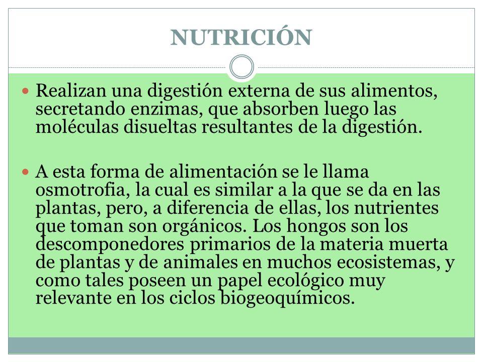 NUTRICIÓN Realizan una digestión externa de sus alimentos, secretando enzimas, que absorben luego las moléculas disueltas resultantes de la digestión.