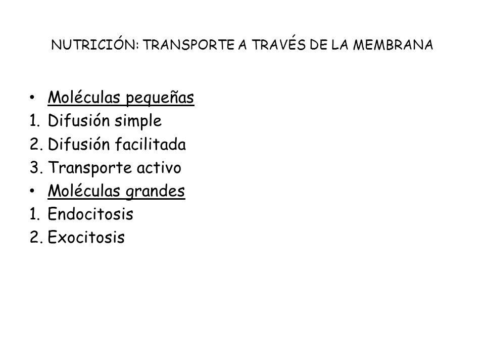 NUTRICIÓN: TRANSPORTE A TRAVÉS DE LA MEMBRANA Moléculas pequeñas 1.Difusión simple 2.Difusión facilitada 3.Transporte activo Moléculas grandes 1.Endoc