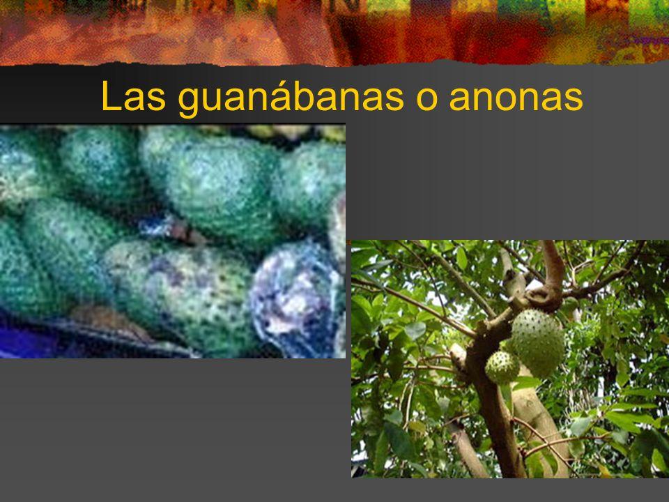 Las guanábanas o anonas