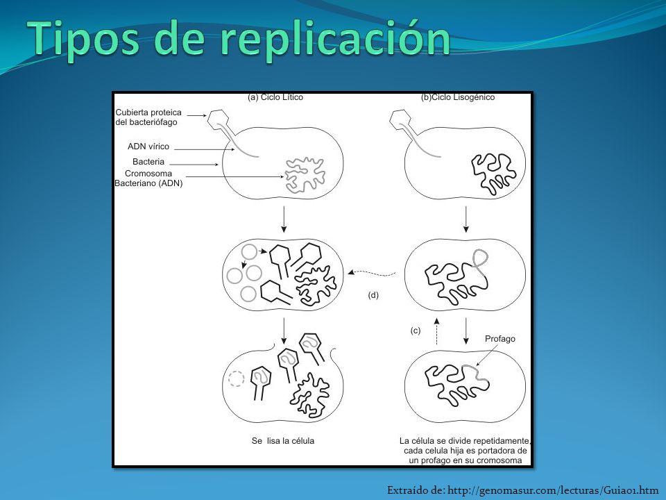 Extraído de: http://genomasur.com/lecturas/Guia01.htm