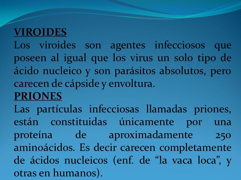 VIROIDES Los viroides son agentes infecciosos que poseen al igual que los virus un solo tipo de ácido nucleico y son parásitos absolutos, pero carecen