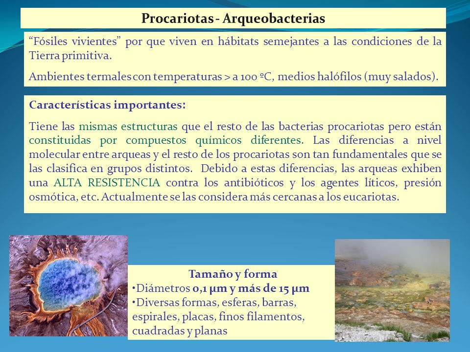 Características importantes: Tiene las mismas estructuras que el resto de las bacterias procariotas pero están constituidas por compuestos químicos di