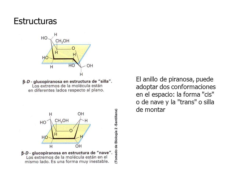 Estructuras El anillo de piranosa, puede adoptar dos conformaciones en el espacio: la forma