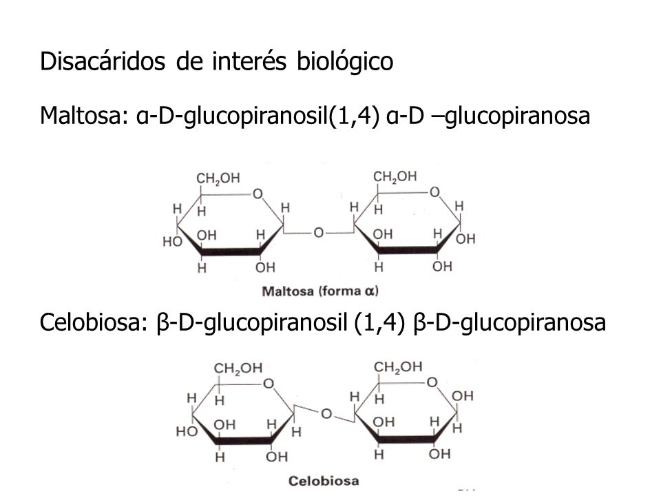Disacáridos de interés biológico Maltosa: α-D-glucopiranosil(1,4) α-D –glucopiranosa Celobiosa: β-D-glucopiranosil (1,4) β-D-glucopiranosa