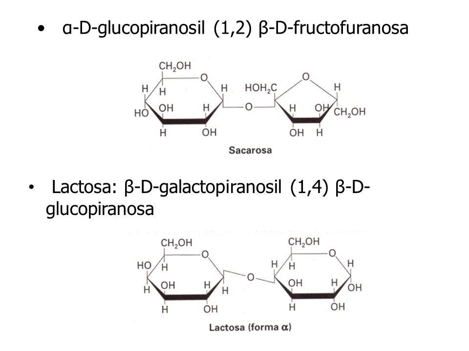 α-D-glucopiranosil (1,2) β-D-fructofuranosa Lactosa: β-D-galactopiranosil (1,4) β-D- glucopiranosa