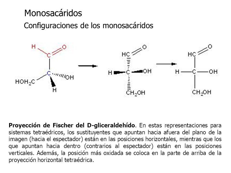 Monosacáridos Configuraciones de los monosacáridos Proyección de Fischer del D-gliceraldehído. En estas representaciones para sistemas tetraédricos, l