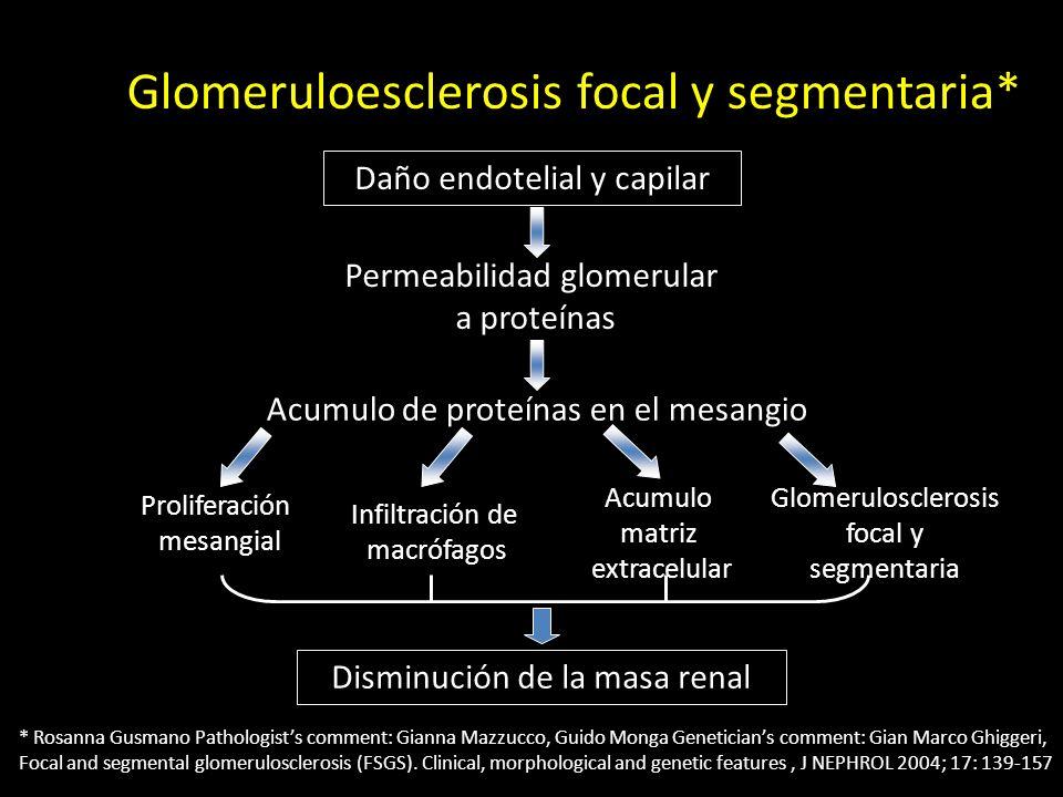 Glomeruloesclerosis focal y segmentaria* Daño endotelial y capilar Permeabilidad glomerular a proteínas Acumulo de proteínas en el mesangio Proliferac