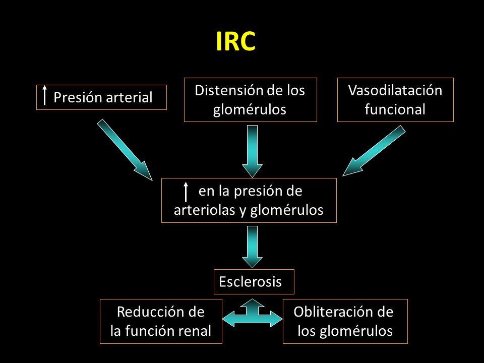 IRC Presión arterial Distensión de los glomérulos Vasodilatación funcional en la presión de arteriolas y glomérulos Esclerosis Obliteración de los glomérulos Reducción de la función renal