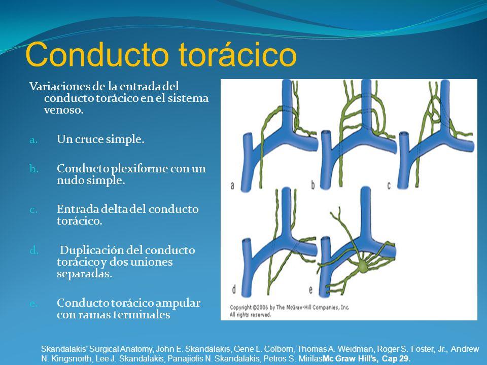 Conducto torácico Variaciones de la entrada del conducto torácico en el sistema venoso. a. Un cruce simple. b. Conducto plexiforme con un nudo simple.