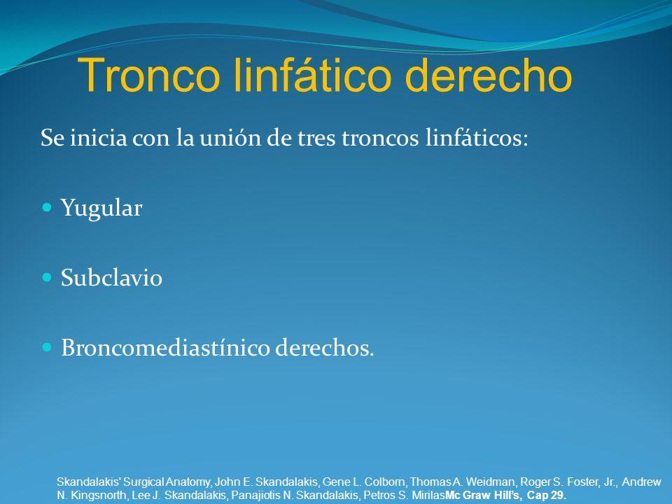 Tronco linfático derecho Se inicia con la unión de tres troncos linfáticos: Yugular Subclavio Broncomediastínico derechos. Skandalakis' Surgical Anato