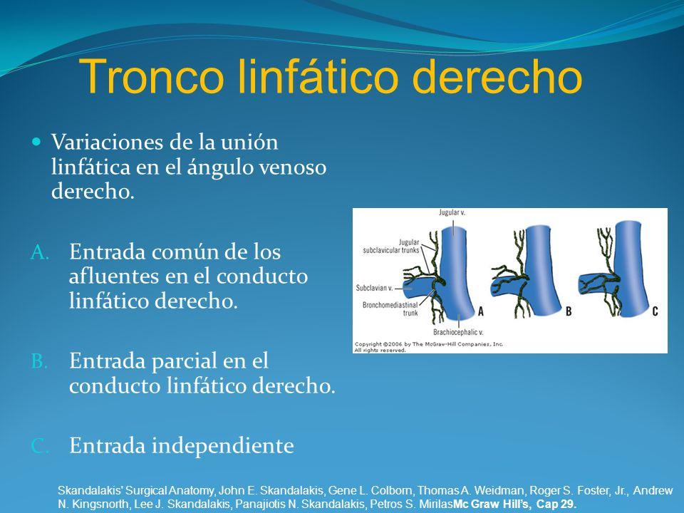 Tronco linfático derecho Variaciones de la unión linfática en el ángulo venoso derecho. A. Entrada común de los afluentes en el conducto linfático der