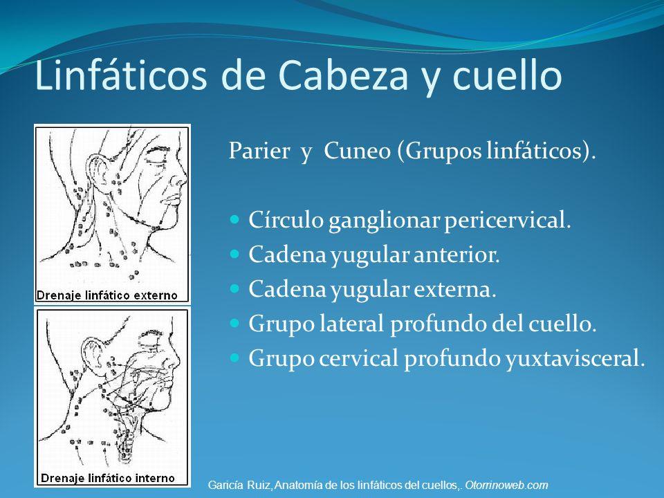 Linfáticos de Cabeza y cuello Parier y Cuneo (Grupos linfáticos). Círculo ganglionar pericervical. Cadena yugular anterior. Cadena yugular externa. Gr