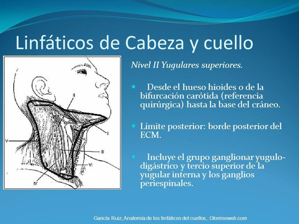 Linfáticos de Cabeza y cuello Nivel II Yugulares superiores. Desde el hueso hioides o de la bifurcación carótida (referencia quirúrgica) hasta la base