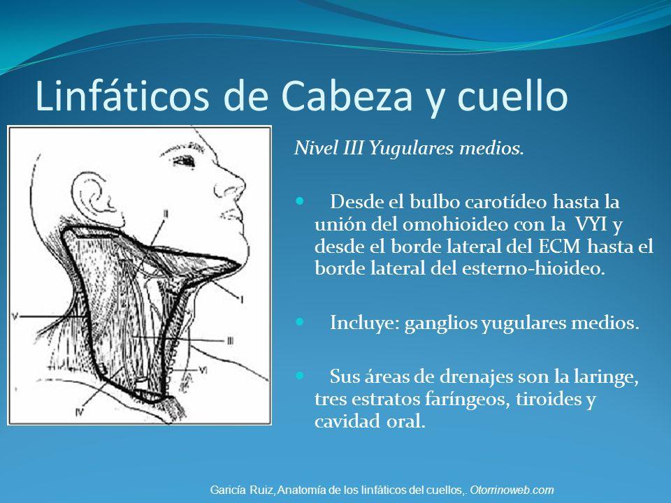 Linfáticos de Cabeza y cuello Nivel III Yugulares medios. Desde el bulbo carotídeo hasta la unión del omohioideo con la VYI y desde el borde lateral d