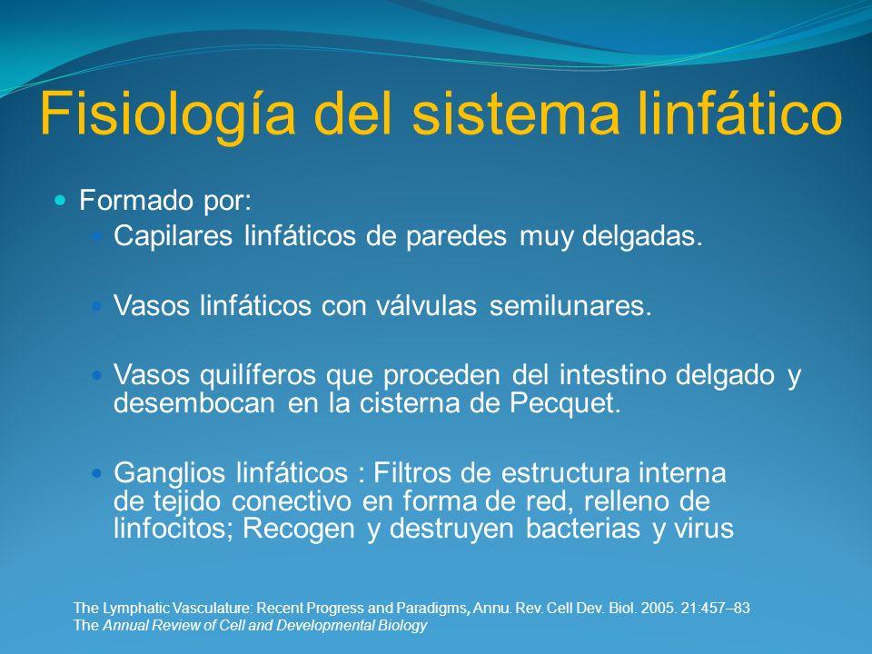 Fisiología del sistema linfático Formado por: Capilares linfáticos de paredes muy delgadas. Vasos linfáticos con válvulas semilunares. Vasos quilífero